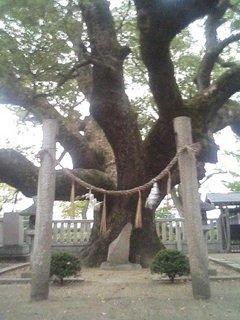 楠木正行供養塚の楠